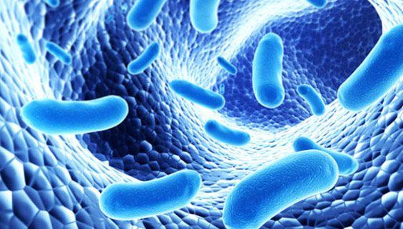 Prébiotiques/probiotiques santé